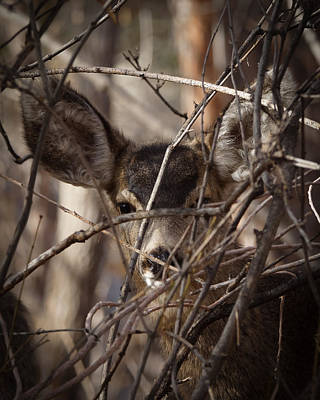 Photograph - Curious Youngster by Ernie Echols