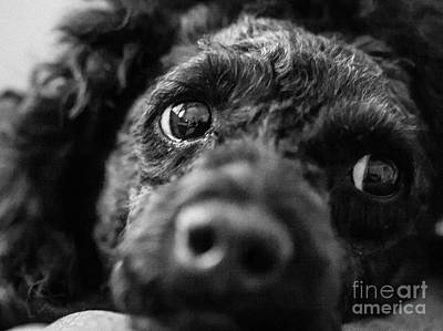 Photograph - Curiousity by Ismo Raisanen