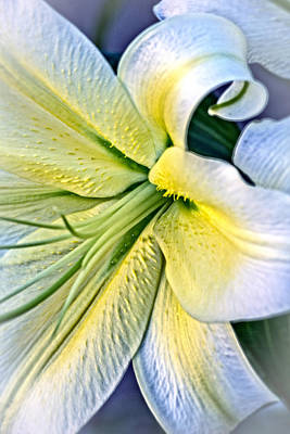 Art Print featuring the photograph Curl Of A Lily by Dave Garner