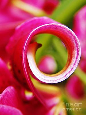 Photograph - Curl With A Pearl by Judy Via-Wolff