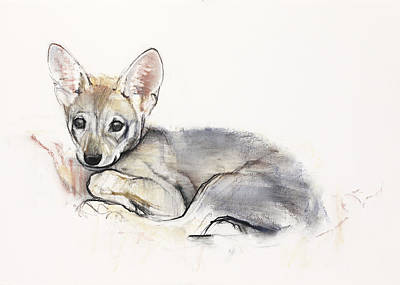 Wolf Pup Painting - Curled Arabian Wolf Pup by Mark Adlington