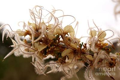 Photograph - Curlleaf Mountain Mahogany by Kerri Mortenson