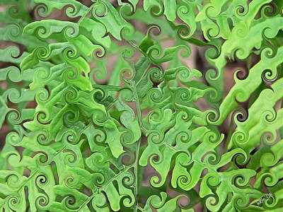 Digital Art - Curly Fronds by Kathy K McClellan
