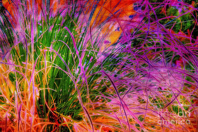 Photograph - Curly Grass by Judi Bagwell