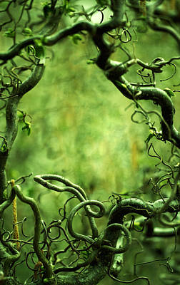 Curly Tree Branches  Art Print by Jaroslaw Blaminsky