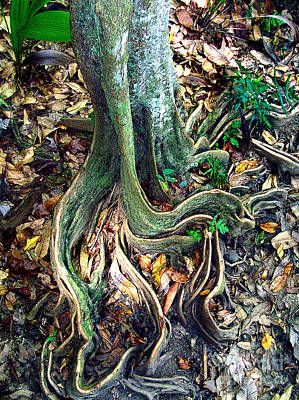 Photograph - Curly Tree Roots by John Potts