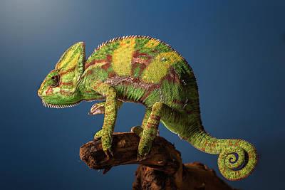 Lizard Wall Art - Photograph - Curro by Jose Garcia