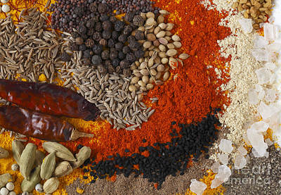 Photograph - Curry Spices Rectangular by Paul Cowan
