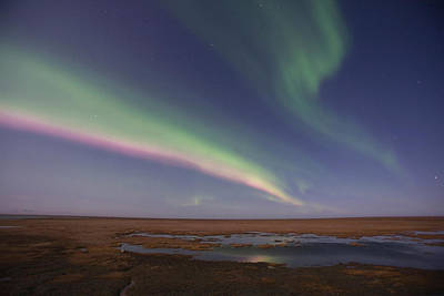 Arctic Rose Photograph - Curtains Of Colored Northern Lights by Hugh Rose