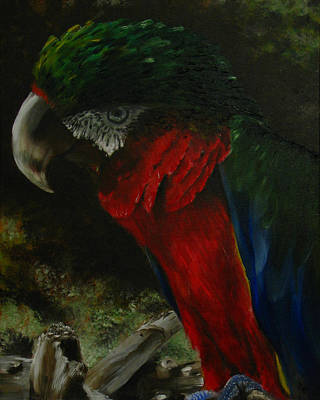 Painting - Curtis The Parrot by Sherry Robinson