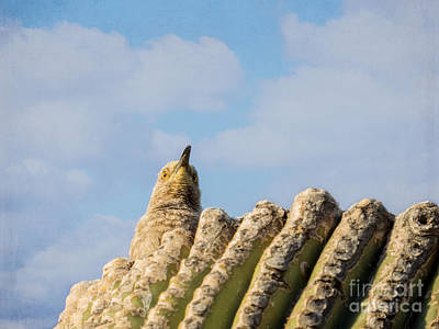 Photograph - Curve-billed Thrasher by Marianne Jensen