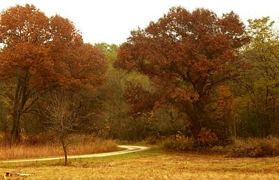 Photograph - Curved Autumn by Wild Thing