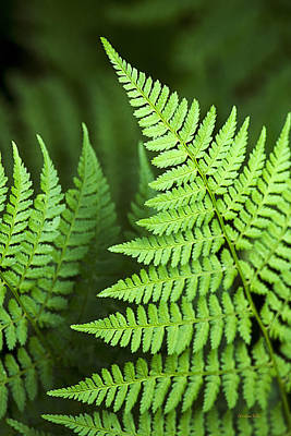 Ostrich Photograph - Curved Fern Leaf by Christina Rollo