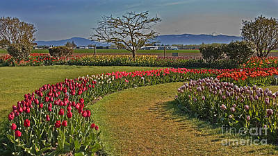 Photograph - Curved Rows Of Tulip Landscape by Valerie Garner