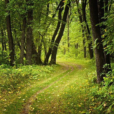 Path In Forest Photograph - Curving Trail Entering Deciduous Forest by Donald  Erickson