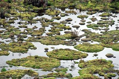 Bog Wall Art - Photograph - Cushion Bog by Sinclair Stammers/science Photo Library