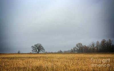 Cut Rye Field Original