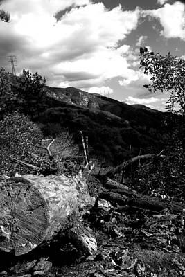 Photograph - Fallen Tree by Gilbert Artiaga