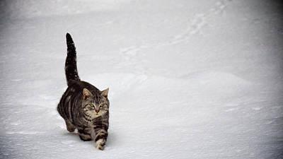 Cute Cat In Snow Art Print
