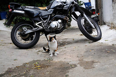 Photograph - Cute Cat With Bike by Haleh Mahbod