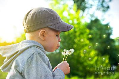 Blow Photograph - Cute Child Blowing Dandelion by Michal Bednarek