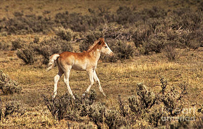 Photograph - Cute Colt Wild Horse On Navajo Indian Reservation  by Jerry Cowart