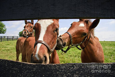 Photograph - Cute Colts by Jill Lang