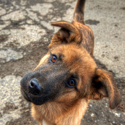 Photograph - Cute Dog Closeup by Vlad Baciu