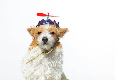 Photograph - Cute Dog With Propeller Hat - The by Amandafoundation.org