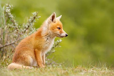 Pinocchio - Cute Fox Kit Art Print by Roeselien Raimond
