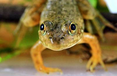 See You Photograph - Cute Frog Face by Dan Sproul