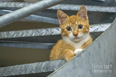 Photograph - Cute Ginger Kitten by Patricia Hofmeester