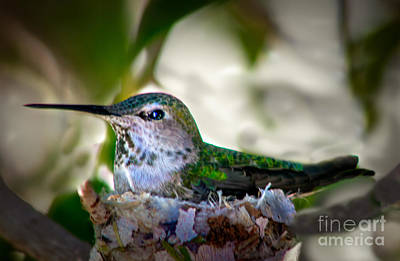 Photograph - Cute Hummer by Robert Bales
