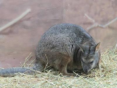 Cute Kangaroo Rat Original by Elisabeth Ann