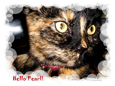 Photograph - Cute Kitty. Hello Pearl by Oksana Semenchenko