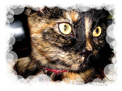 Photograph - Cute Kitty Card by Oksana Semenchenko