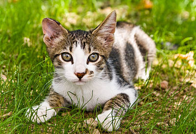 Cute Kitty In The Grass Art Print by Cristina-Velina Ion