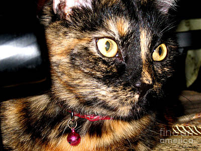Photograph - Cute Kitty by Oksana Semenchenko
