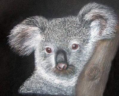 Drawing - Cute Koala by Mary Mayes