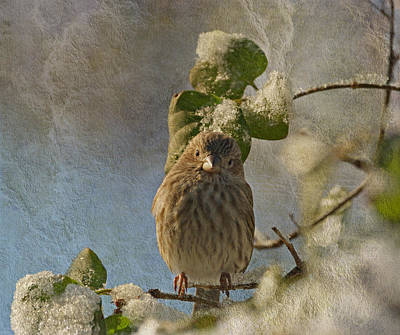 Photograph - Cute Little Finch by Sandy Keeton