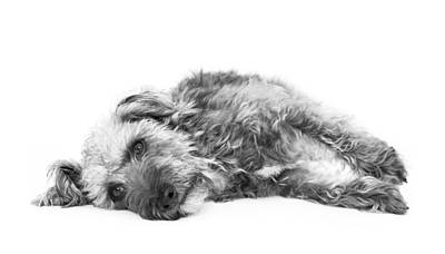 Cute Dogs Digital Art - Cute Pup Lying Down - Black And White by Natalie Kinnear