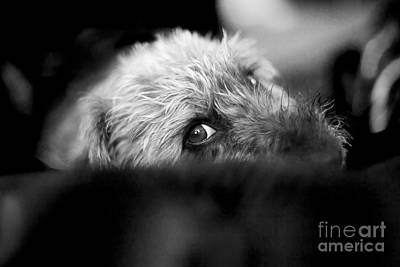 Cute Dogs Digital Art - Cute Pup Sneek A Peek by Natalie Kinnear