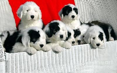 Cute Puppies Art Print
