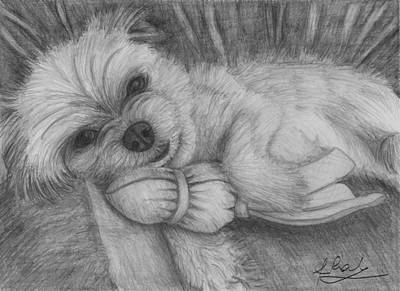 Puppies Playing Drawing - Cute Puppy Playing by Raluca Feresteanu