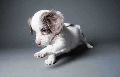 Photograph - Cute Puppy - The Amanda Collection by Amandafoundation.org