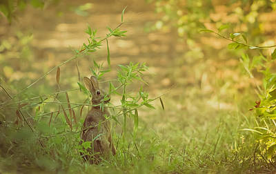 Photograph - Cute Rabbit In The Patch by Kim Henderson