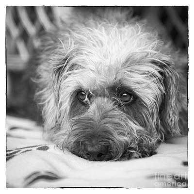 Animal Lover Digital Art - Cute Scruffy Pup In Black And White by Natalie Kinnear