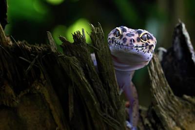 Lizard Wall Art - Photograph - Cute Smile by Fauzan Maududdin