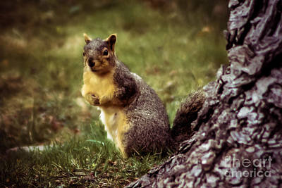 Fox Squirrel Photograph - Cute Squirrel by Robert Bales
