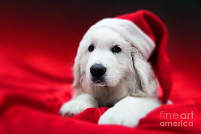 Cute White Puppy Dog In Chrstimas Hat Lying In Red Satin Art Print by Michal Bednarek